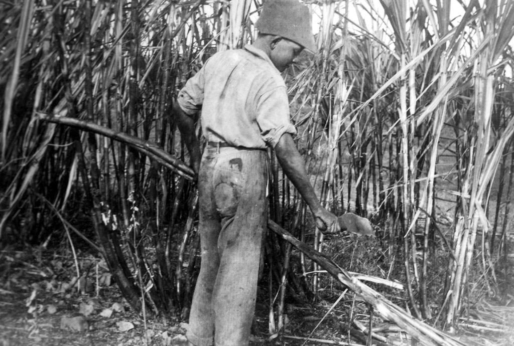 1939_self_cutting_cane-1