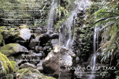 Toolona-Creek-Track, Lamington National Park